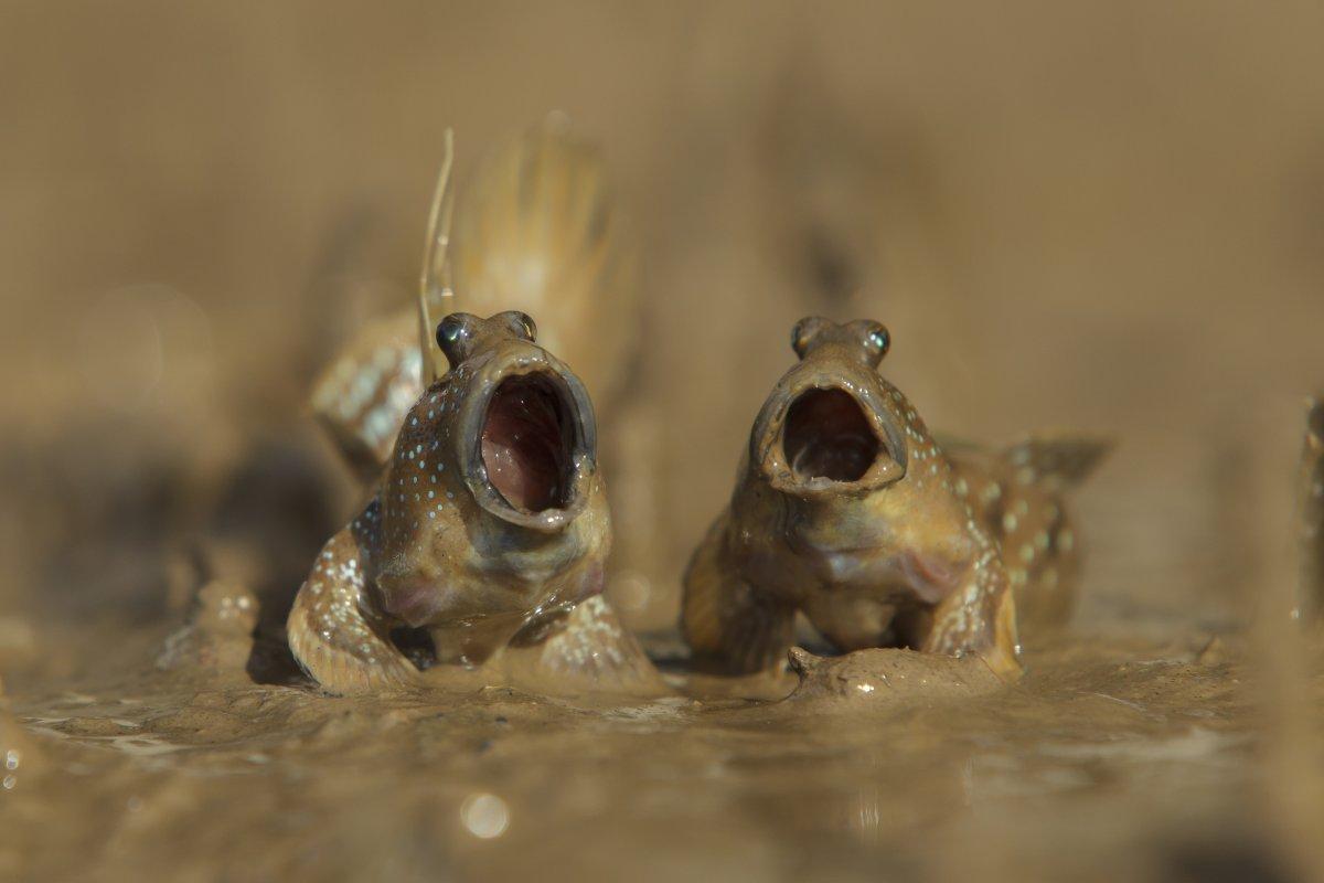 As engraçadas vencedoras do Concurso de Fotos Cômicas de Vida Selvagem de 2017 10