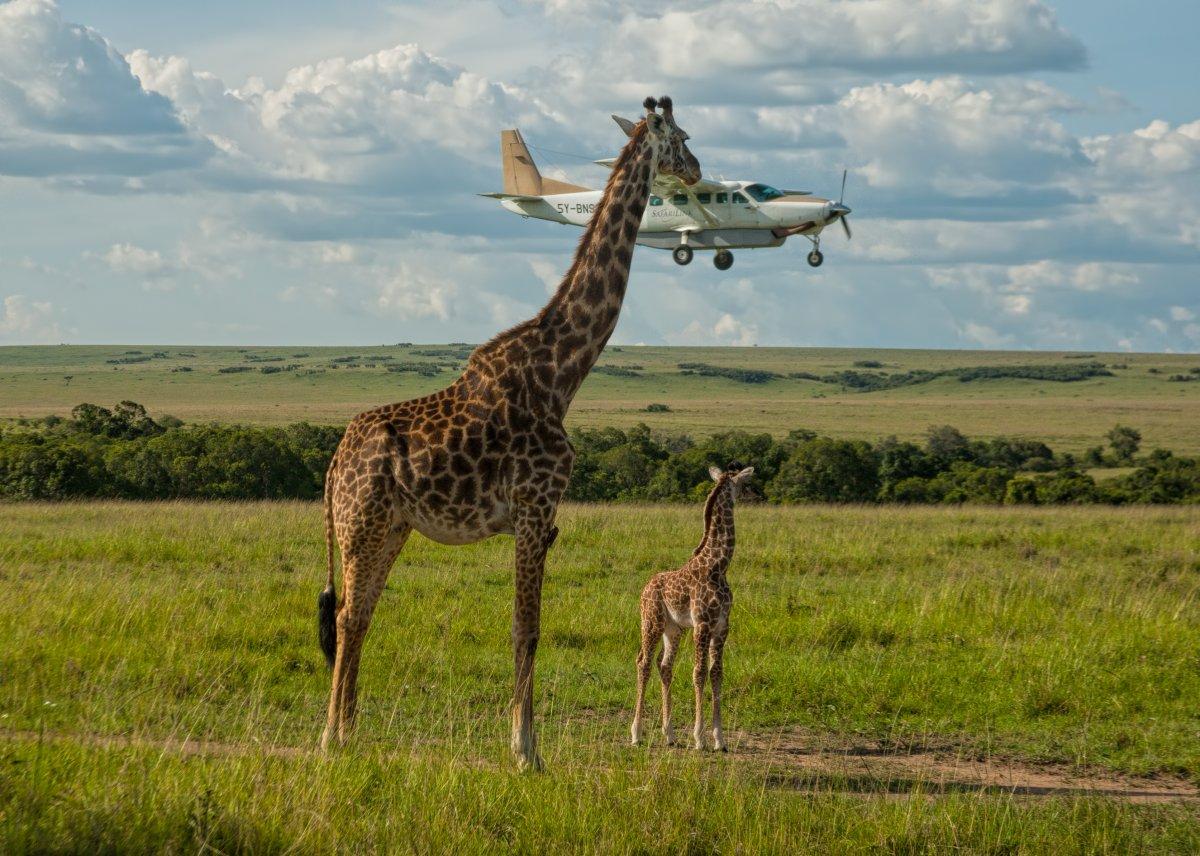 As engraçadas vencedoras do Concurso de Fotos Cômicas de Vida Selvagem de 2017 17