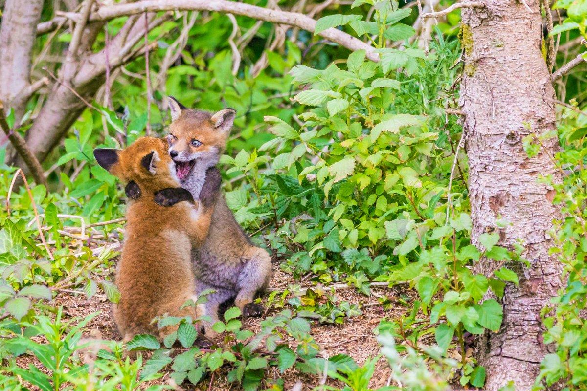 As engraçadas vencedoras do Concurso de Fotos Cômicas de Vida Selvagem de 2017 31