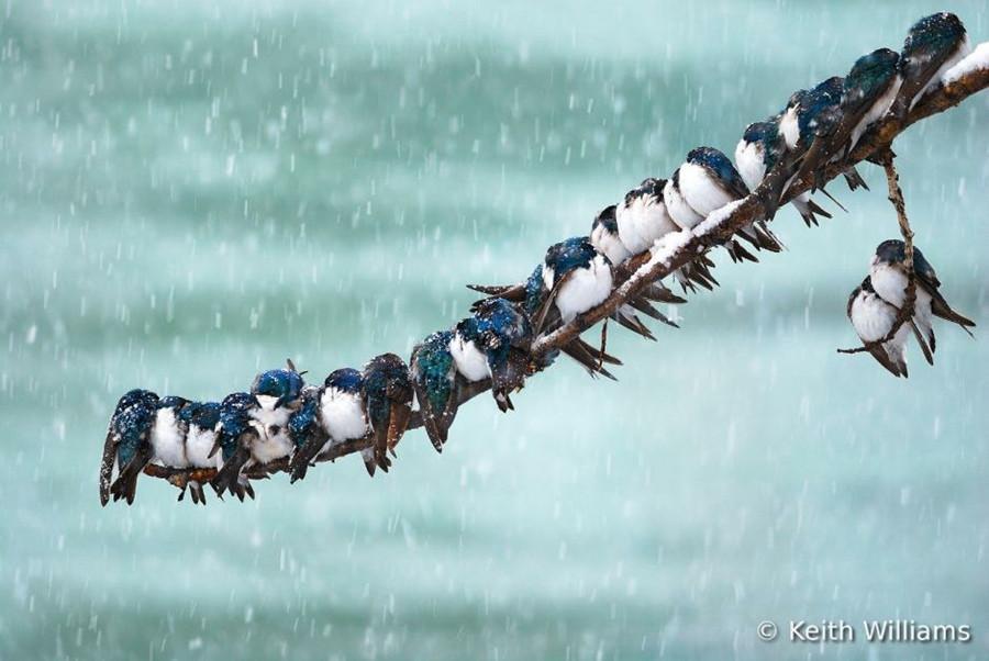 Concurso Mundial de Fotos de Pássaros 2012  02