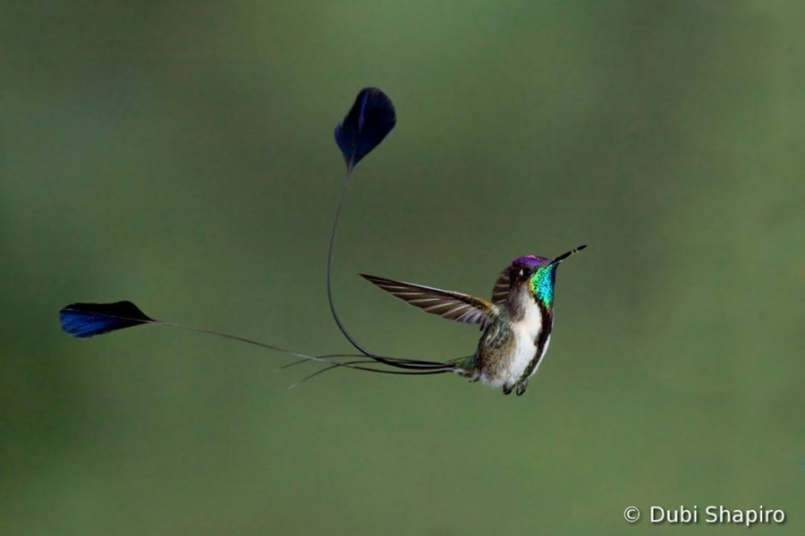 Concurso Mundial de Fotos de Pássaros 2012  04