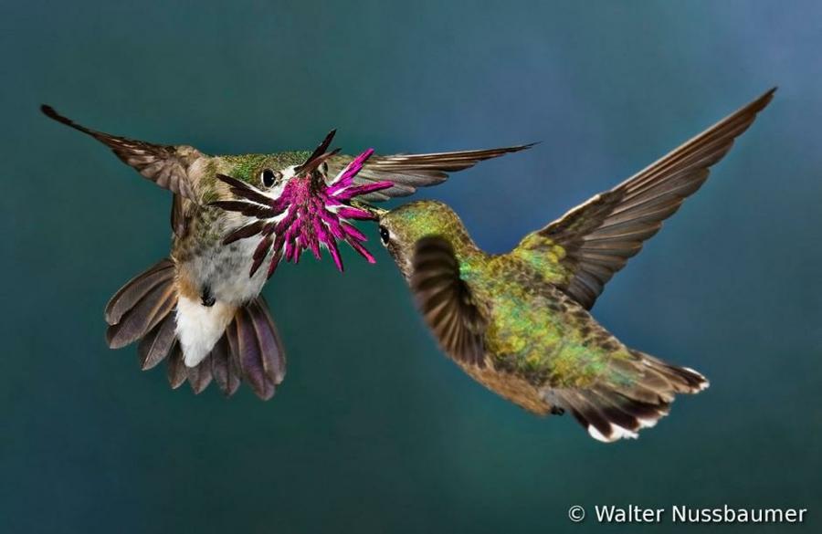 Concurso Mundial de Fotos de Pássaros 2012  05