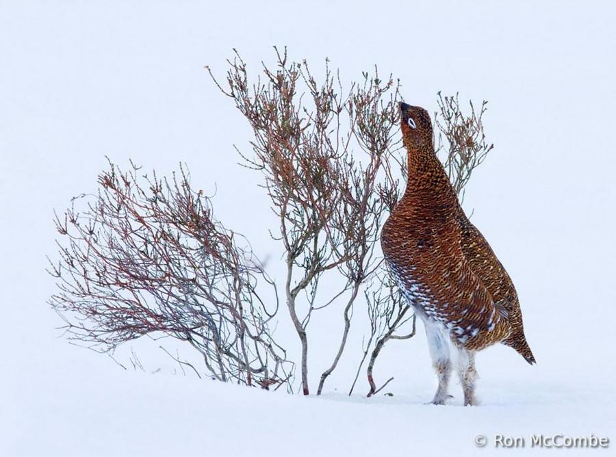 Concurso Mundial de Fotos de Pássaros 2012  06