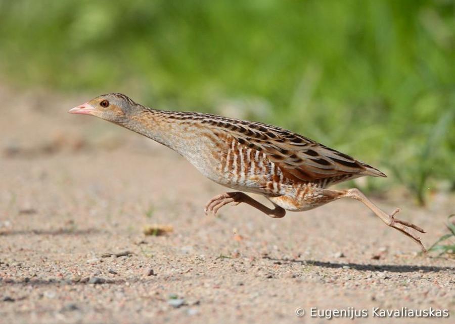 Concurso Mundial de Fotos de Pássaros 2012  07