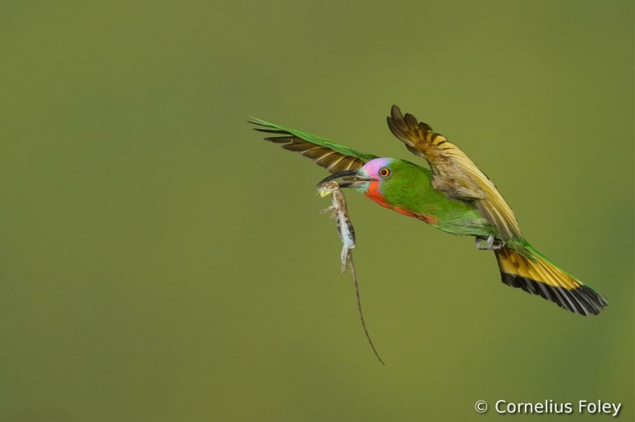 Concurso Mundial de Fotos de Pássaros 2012  08