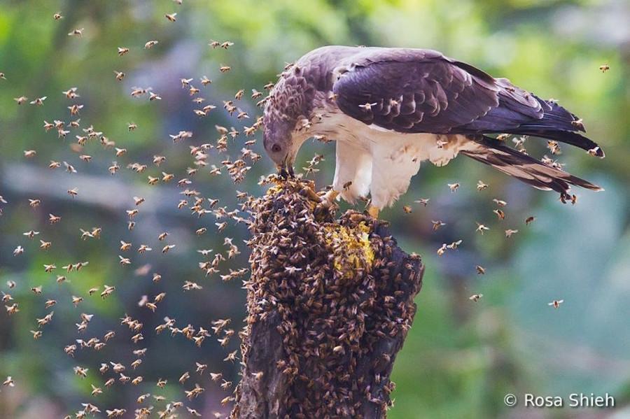 Concurso Mundial de Fotos de Pássaros 2012  13