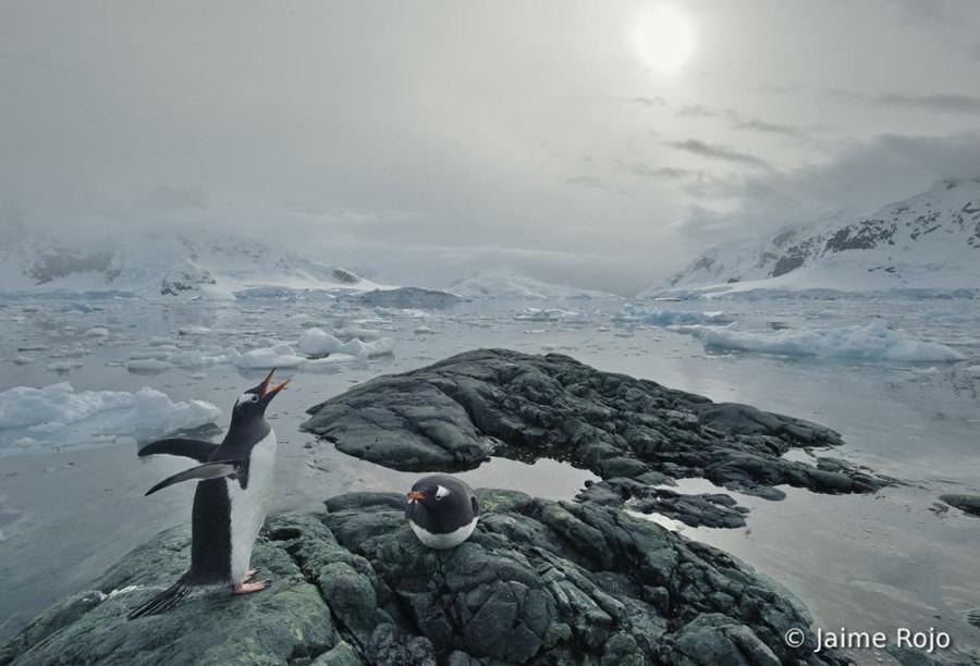 Concurso Mundial de Fotos de Pássaros 2012  15