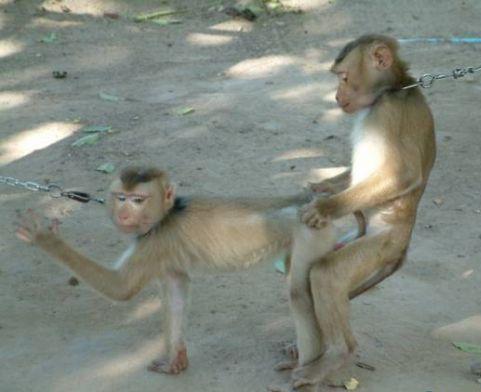 Sete motivos para você nao levar as crianças ao zoológico