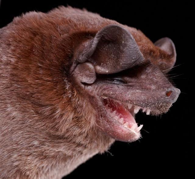 Diversidade de morcegos 01