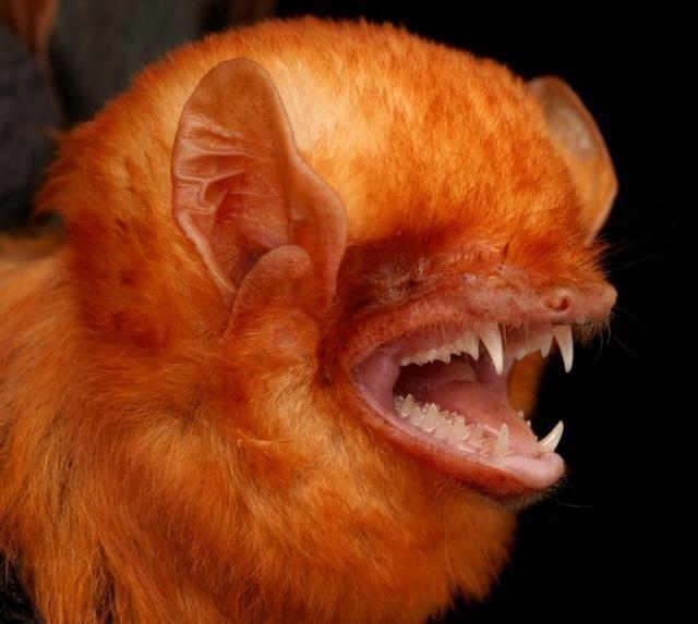 Diversidade de morcegos 02