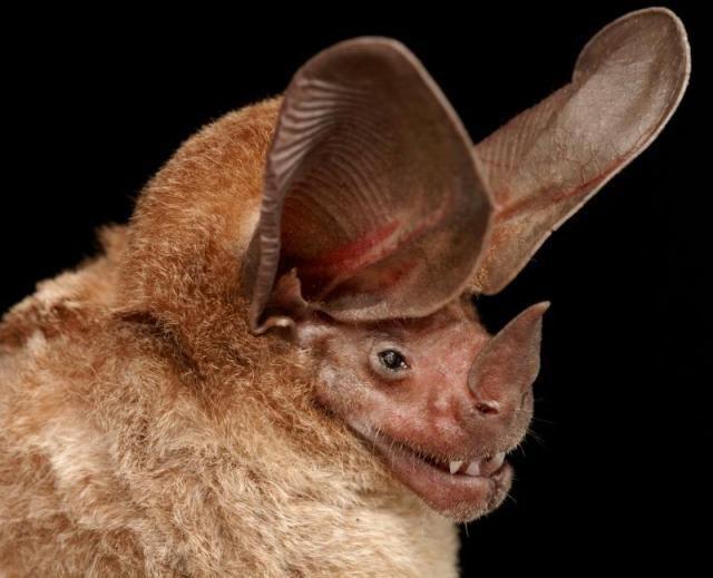Diversidade de morcegos 03
