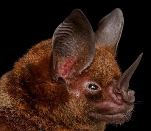 Diversidade de morcegos 04