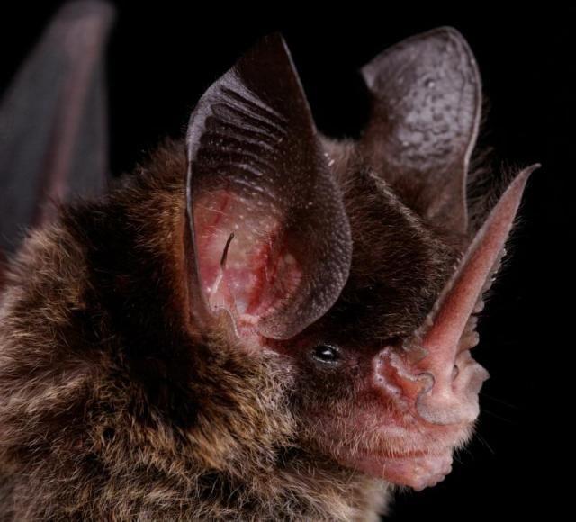 Diversidade de morcegos 05