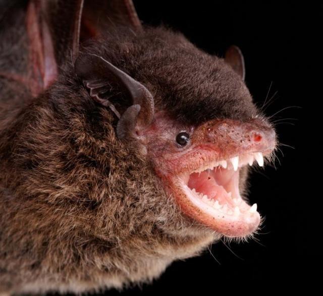 Diversidade de morcegos 07