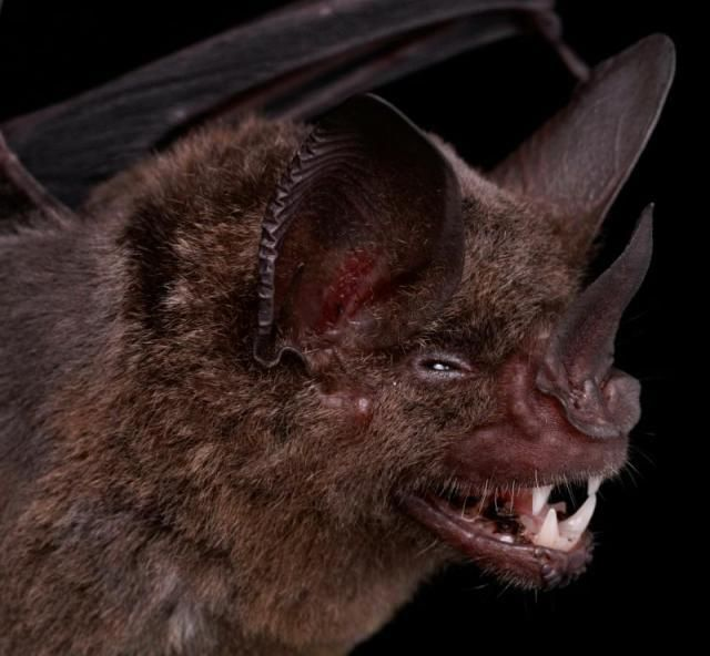 Diversidade de morcegos 09