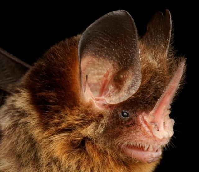 Diversidade de morcegos 13