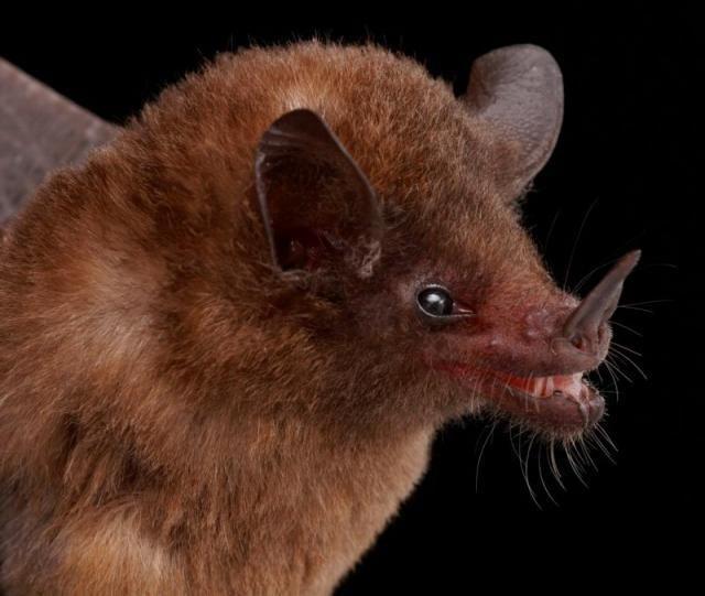 Diversidade de morcegos 14