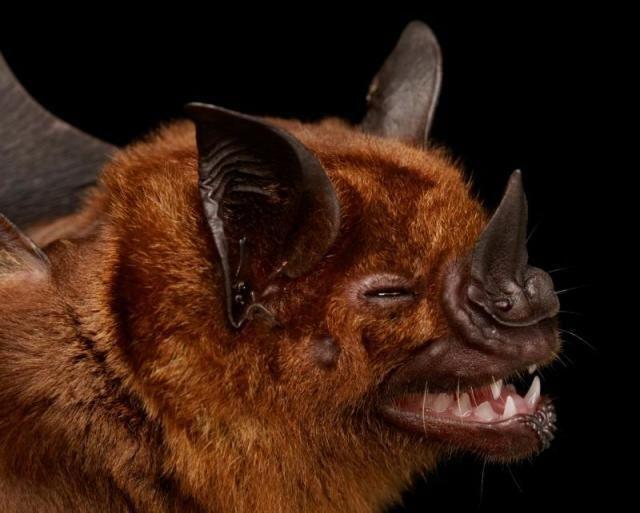 Diversidade de morcegos 15