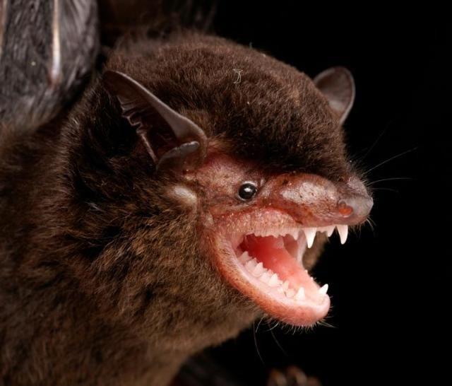 Diversidade de morcegos 19