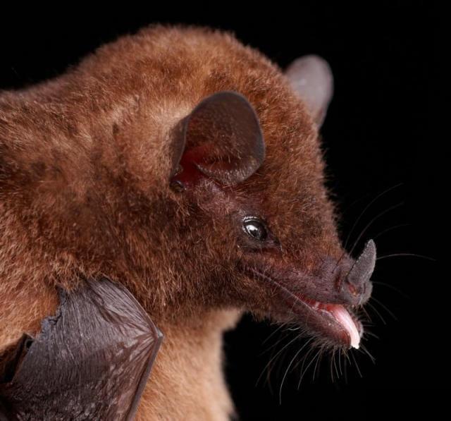 Diversidade de morcegos 21