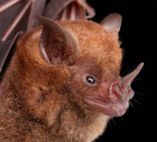 Diversidade de morcegos 23