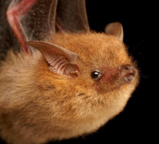 Diversidade de morcegos 24