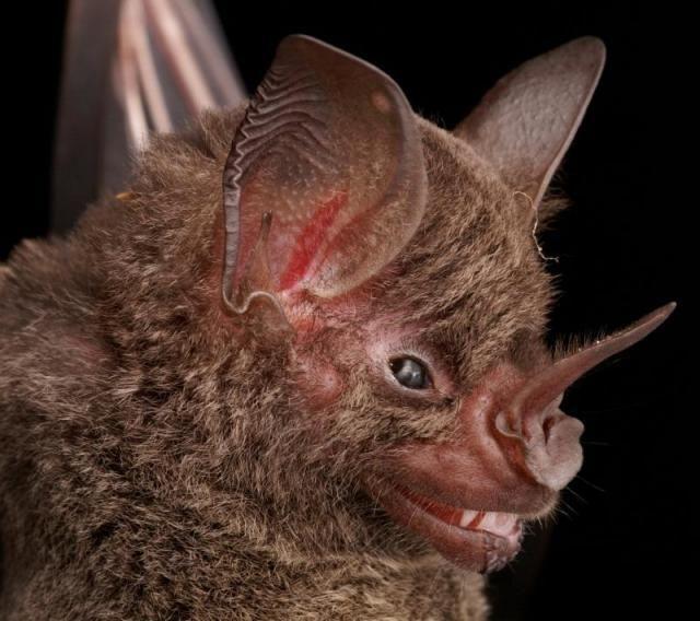 Diversidade de morcegos 35