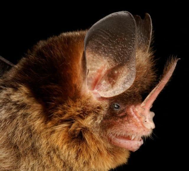 Diversidade de morcegos 39