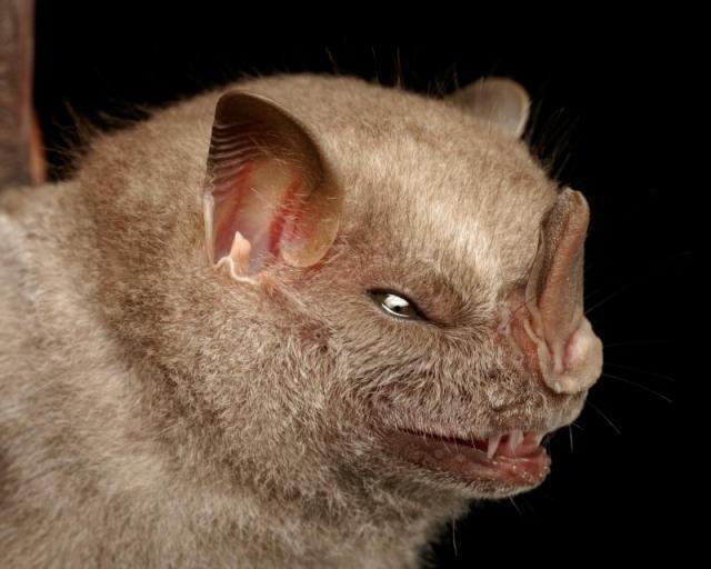 Diversidade de morcegos 44