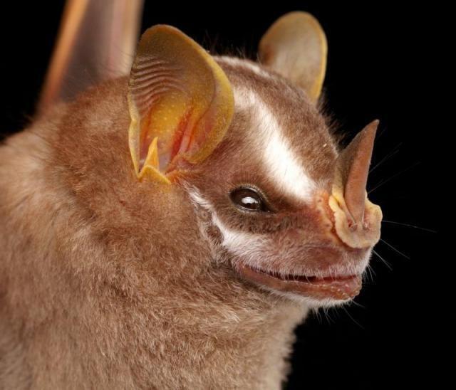 Diversidade de morcegos 45