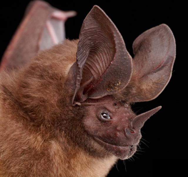 Diversidade de morcegos 46