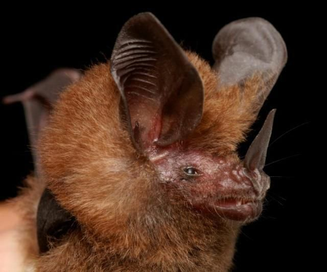 Diversidade de morcegos 47