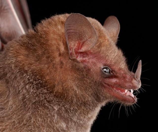 Diversidade de morcegos 48