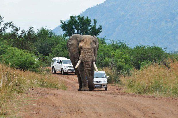 Safari + elefante irado = baita susto 01