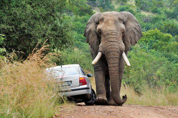 Safari + elefante irado = baita susto 02