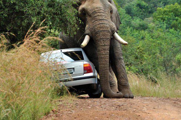 Safari + elefante irado = baita susto 03