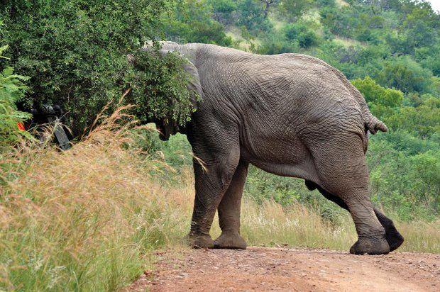 Safari + elefante irado = baita susto 06