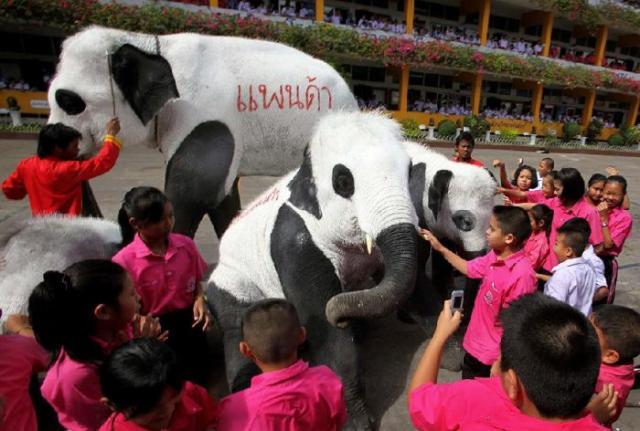 Elefantes querem ser ursos-panda na Tailândia