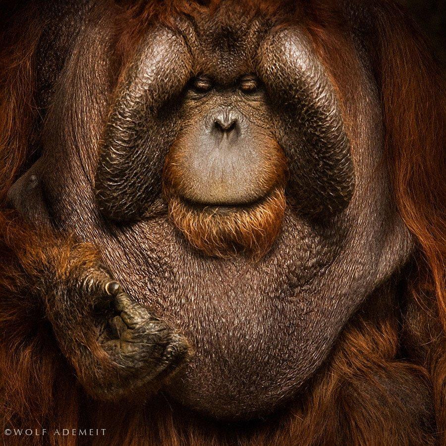21 retratos intensos de animais como você nunca viu antes 06