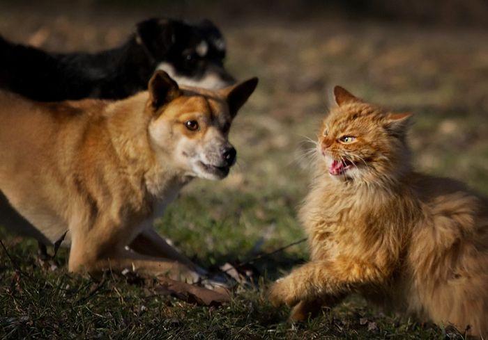 Um exército de gatos 03