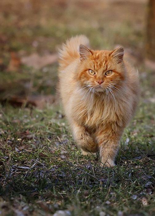 Um exército de gatos 06