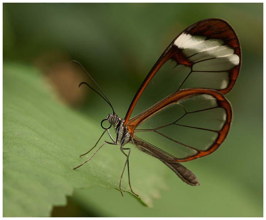 50 fascinantes fotografias de borboletas coloridas
