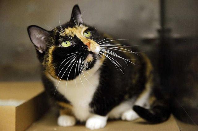 Willow, a gata que voltou para casa depois de 5 anos 01