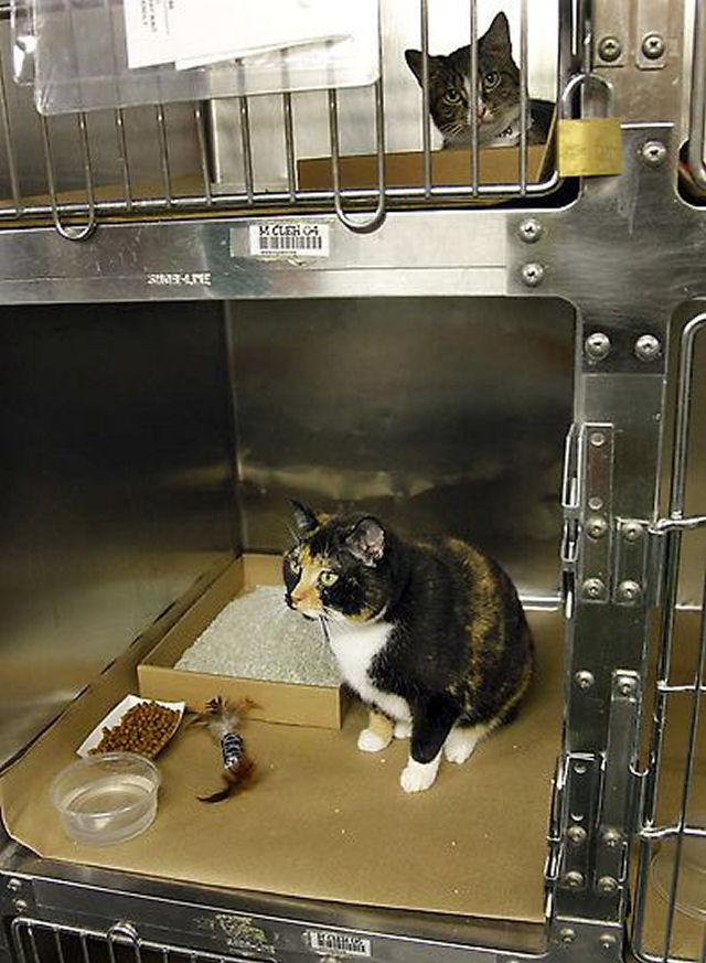 Willow, a gata que voltou para casa depois de 5 anos 02