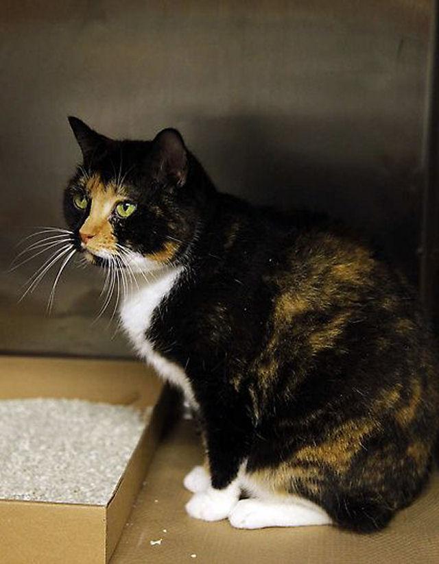 Willow, a gata que voltou para casa depois de 5 anos 03