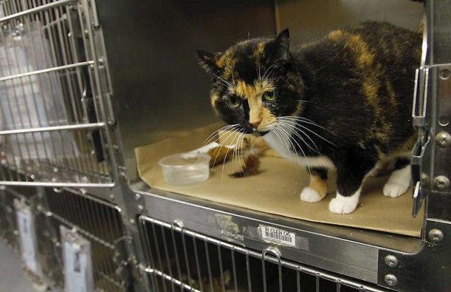 Willow, a gata que voltou para casa depois de 5 anos 04