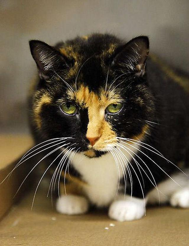 Willow, a gata que voltou para casa depois de 5 anos 05