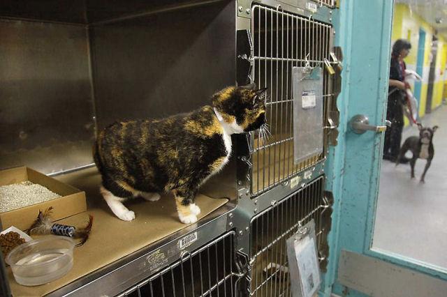 Willow, a gata que voltou para casa depois de 5 anos 06