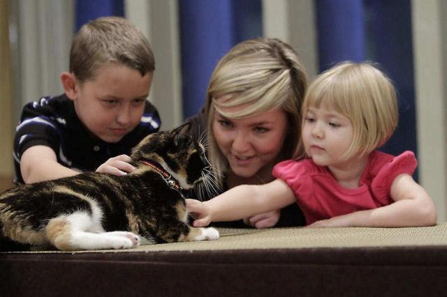 Willow, a gata que voltou para casa depois de 5 anos 09