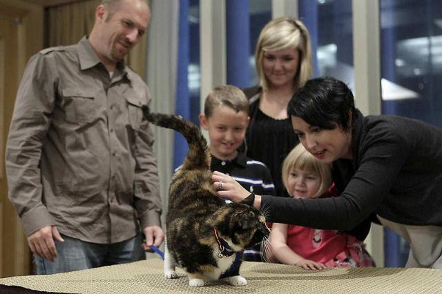Willow, a gata que voltou para casa depois de 5 anos 10